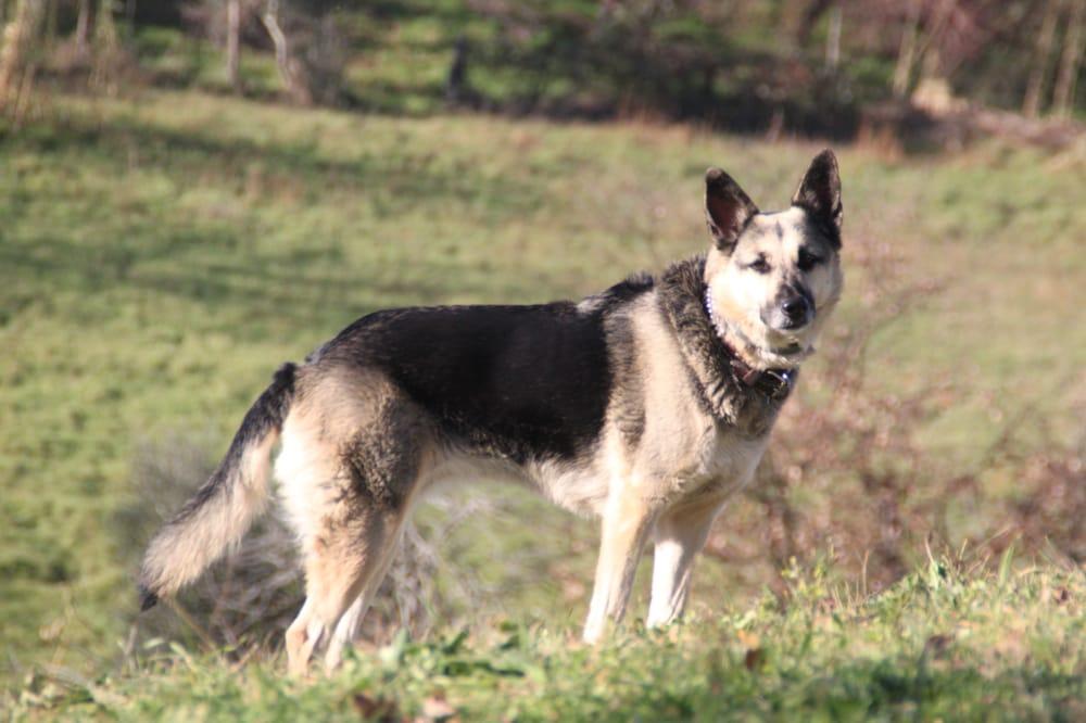 Pup Stars Pet Care