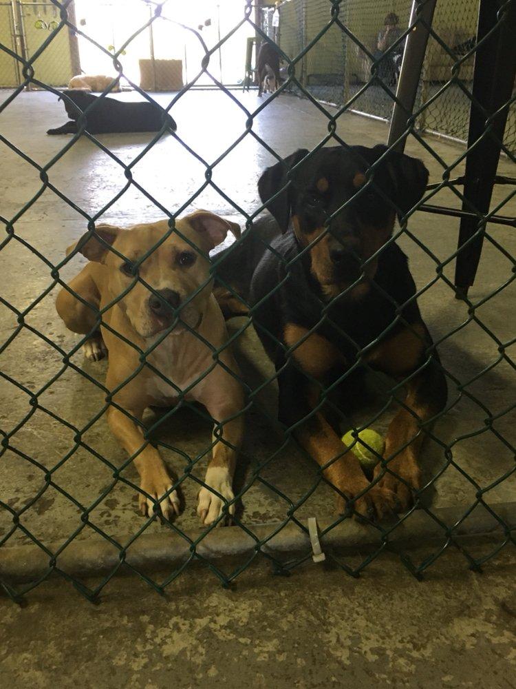 Bark Avenue Dog Day Camp: 100 Naamans Rd, Claymont, DE