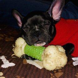 Little Shop Of Pets 12 Photos 34 Reviews Pet Stores 2909