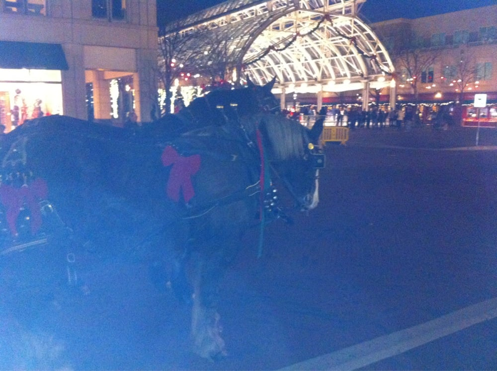 Horse Drawn Carriage Yelp