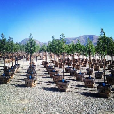 Brightview Tree Company 3200 W Telegraph Rd Fillmore Ca Landscape Designers Mapquest