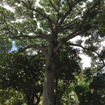 Foster Botanical Garden 966 Pos 113 S