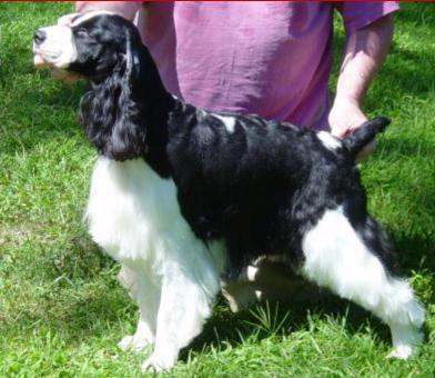 Superdogs Daycare: 637 Daniel Webster Hwy, Merrimack, NH