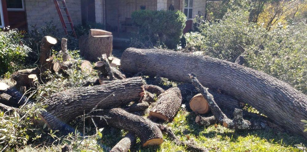 Sanchez's Tree Service: Austin, TX