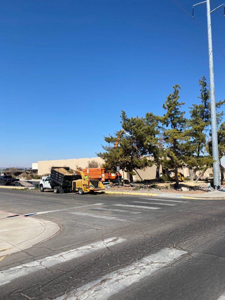 The Tree Boss: Las Cruces, NM