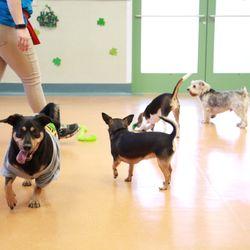 dog boarding corpus christi