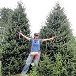 photo of jans cut your own christmas trees clear lake mn united states