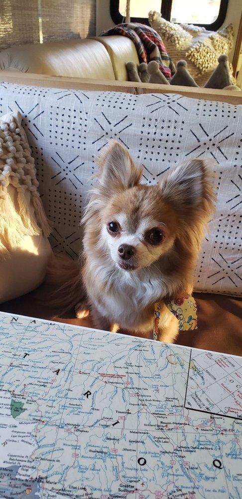 Doggie del Sol: 1519 Hwy 22 W, Madisonville, LA