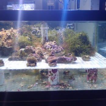 Capitol aquarium closed 35 photos 43 reviews pet for Fishing store sacramento