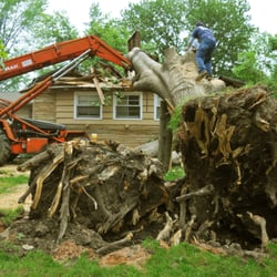 Tree service of long island tree services 150 motor for 150 motor parkway hauppauge