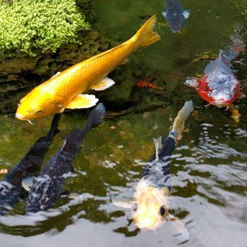 Anaheim majestic garden hotel 377 photos 311 reviews hotels 900 s disneyland dr anaheim for Anaheim majestic garden hotel yelp