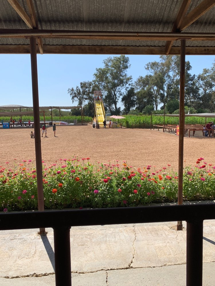 Hunter Farms Pumpkin Patch: 2985 N Southern Pacific Ave, Atwater, CA