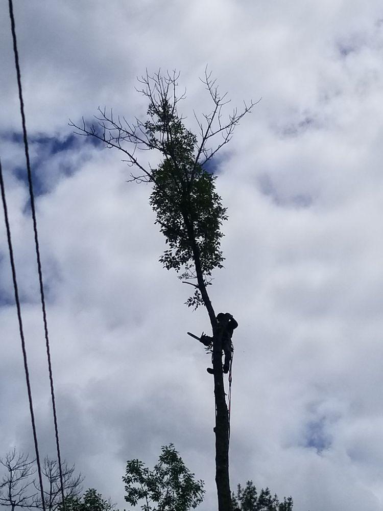 LB Tree Service: Cairo, NY