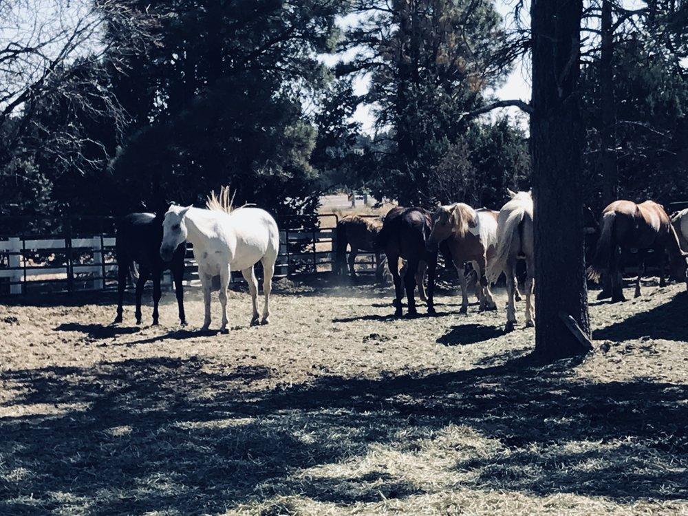Raney Ranch: Overgaard, AZ