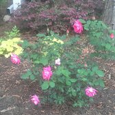 Charmant Garden Supply Company   37 Photos U0026 38 Reviews   Nurseries ...