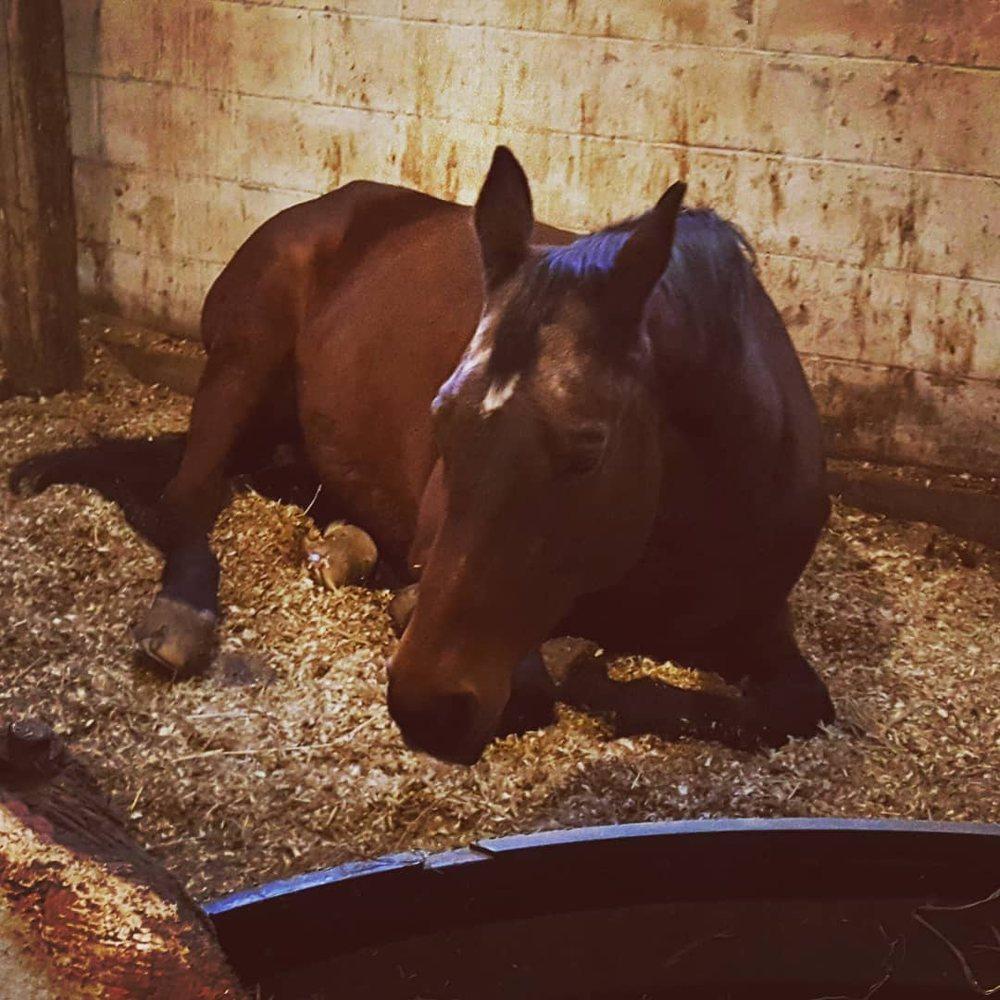 Hidden Meadow Equestrian Center: 1757 Main St, Glastonbury, CT