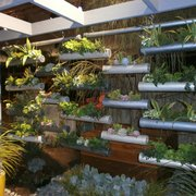 ... Photo Of Vertical Garden Solutions   Encinitas, CA, United States ...