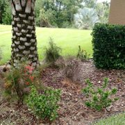 Photo Of Keep It Green Nursery Apollo Beach Fl United States Plants