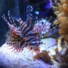 Exquisite Aquariums - Aquarium Services - Santa Barbara ...