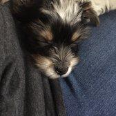 Yorkies of Houston - 309 Photos & 24 Reviews - Pet Stores
