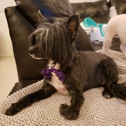 So Fetch - 60 Photos & 27 Reviews - Pet Groomers - 7565