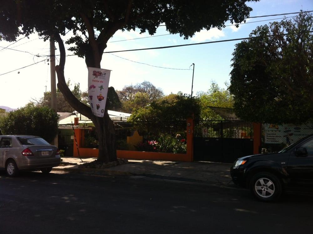 Orquideas phal viveros y jardiner a calle las rosas n for Viveros en oaxaca
