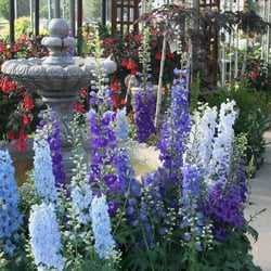 Exceptional Photo Of Youngu0027s Garden Center   Roseburg, OR, United States.