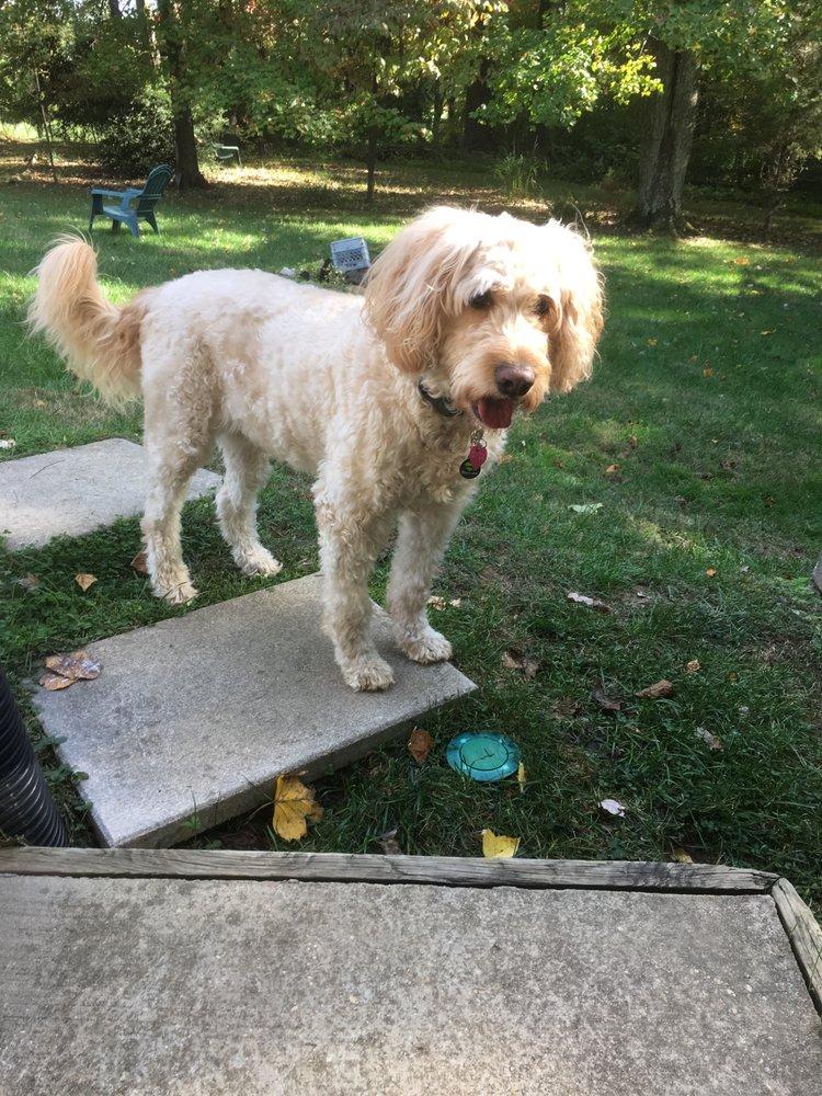 Aspen Hill Dog Care: 2824 Cairncross Ter, Silver Spring, MD