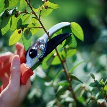 Southern Landscaping and Irrigation: 8335 Summa Ave, Baton Rouge, LA