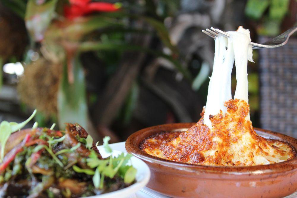 Jaguar Restaurant | Latin American Habitat