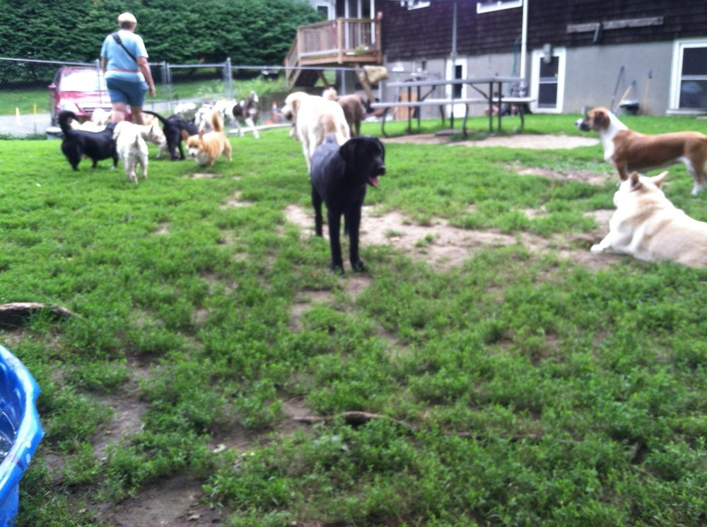 Happy dog daycare pet boarding pet sitting natick ma for Dog boarding places near me