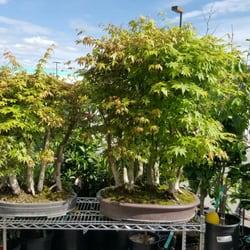 Photo Of Phuong Nam Plants San Jose Ca United States Bonsai Trees