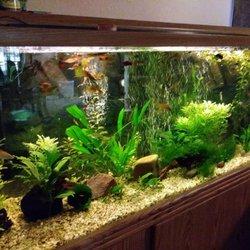 R and R Aquarium Services - Request a Quote - Aquarium Services