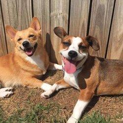 Photo Of Atlanta Dog Spa