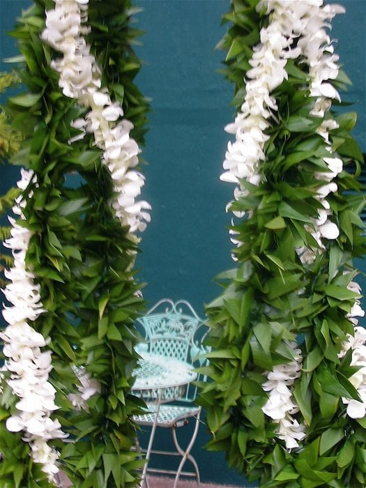 Maile Style Ti Leaf W White Dendrobium Orchid Leis
