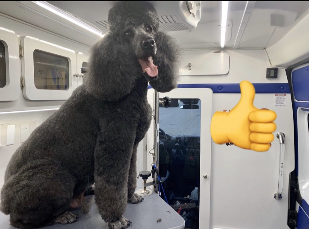 Furry Land - Mobile Grooming and Pet Supplies