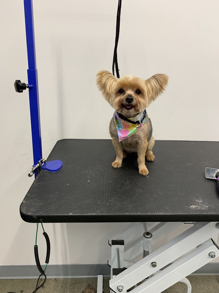 Chewy's Paws Dog Grooming