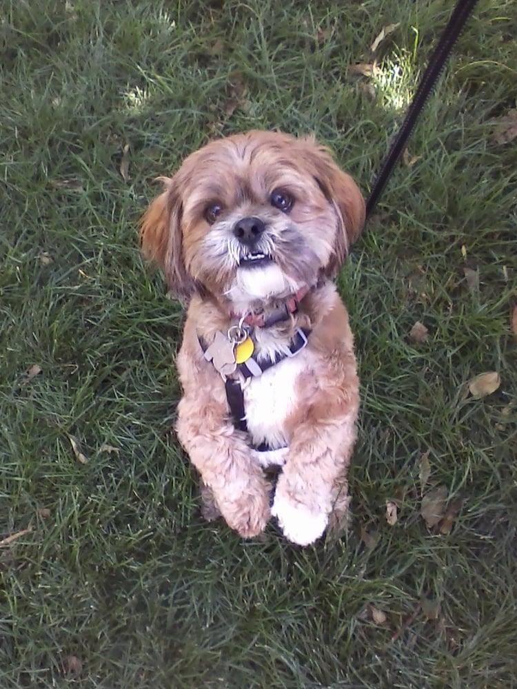 Dog Training Yelp Thornton
