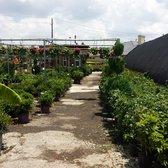 Photo Of Cristinas Garden Center   Dallas, TX, United States