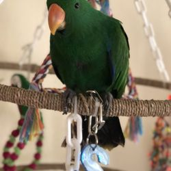 Exotic Birds of Denver - 16 Reviews - Pet Stores - 3921 S Broadway