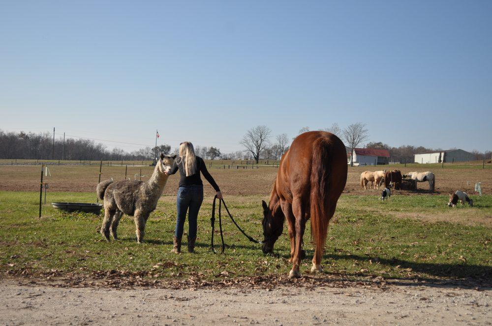 Wild Rose Equestrian Center: 589 Franklin Ln, Elizabethtown, KY