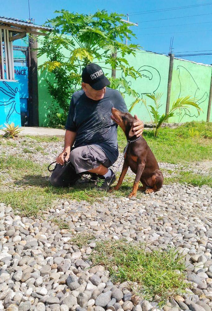 Always Alert Dog Training: 12461 Adams St, Brooksville, FL