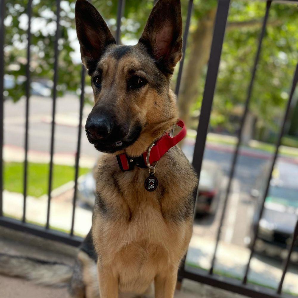 E-Quality Dog Training: 404 Reynolds Rd, Chesnee, SC