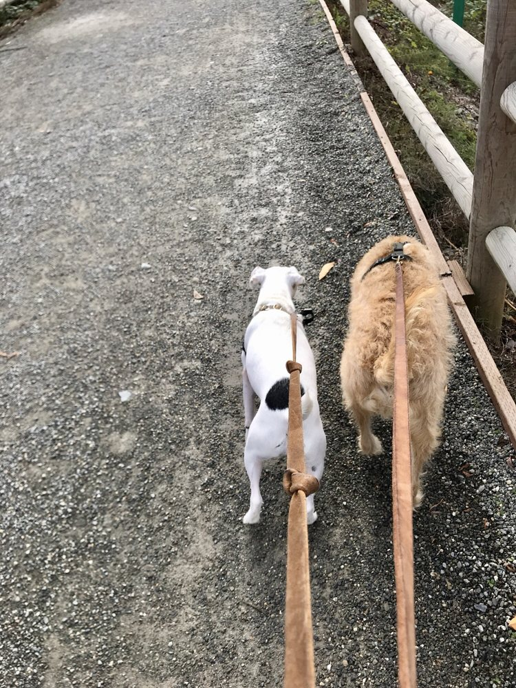 4PAWS and a WAG: Bellevue, WA