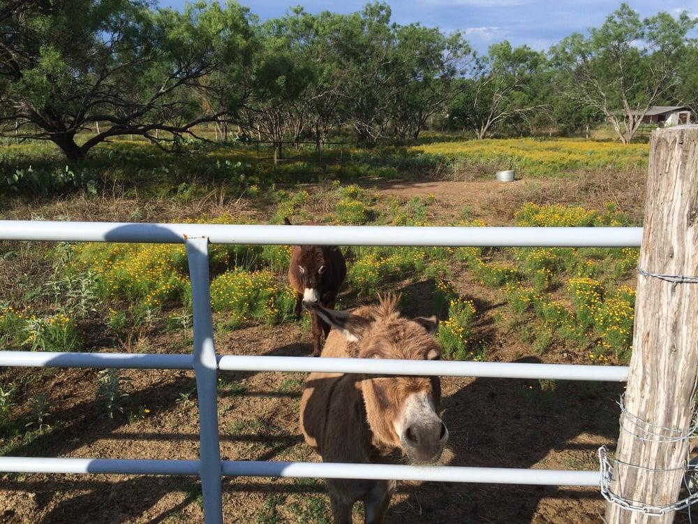 Circle Your Wagons: 2236 W Ranch Rd 152, Llano, TX