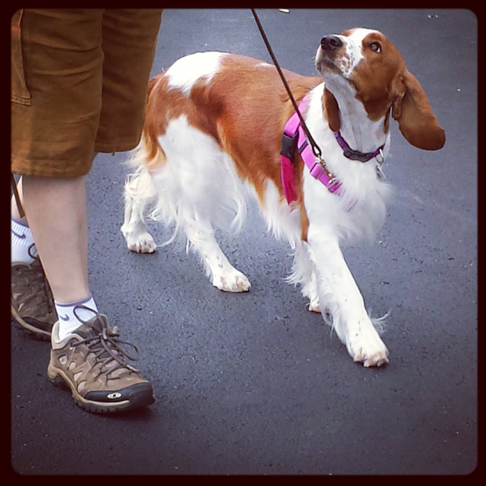 L'Chaim Canine: Akron, OH