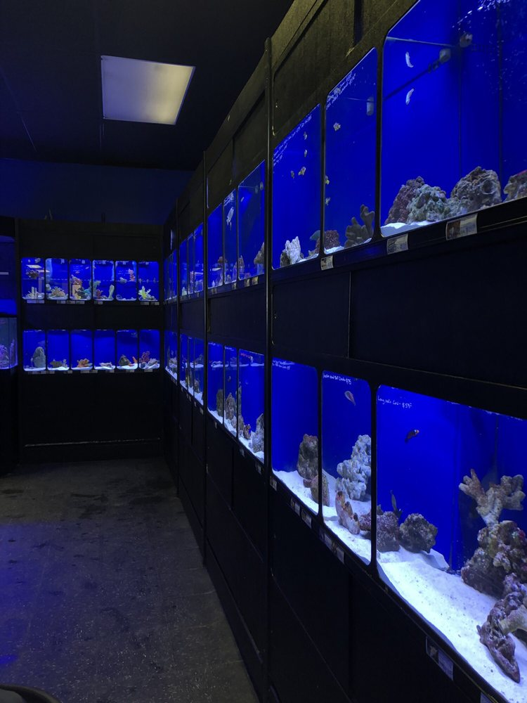 Exotic Aquatics: 2929 Custer Rd, Plano, TX