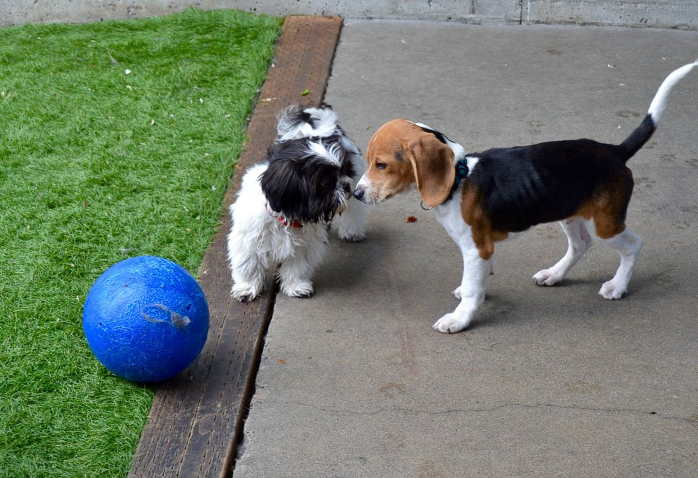 Positive Approach Dog Training Daycare Tacoma Wa