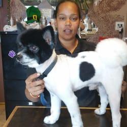 Yucaipa Dog Grooming
