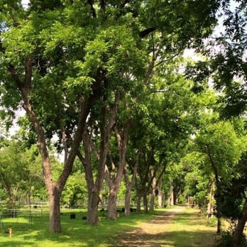Photo Of Fanicku0027s Garden Center   San Antonio, TX, United States. Giant  Pecan